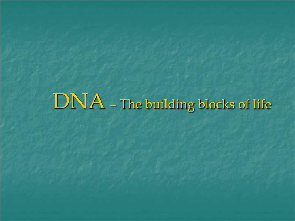dna the building blocks of life