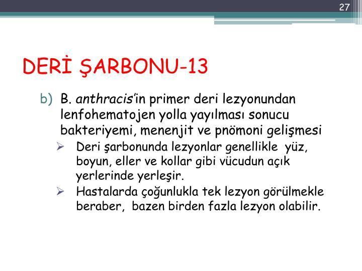 DERİ ŞARBONU-13