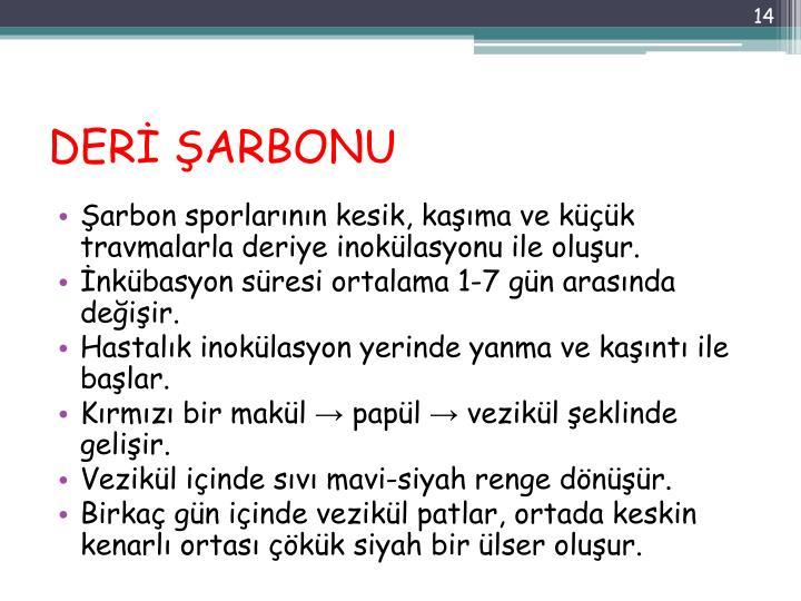 DERİ ŞARBONU