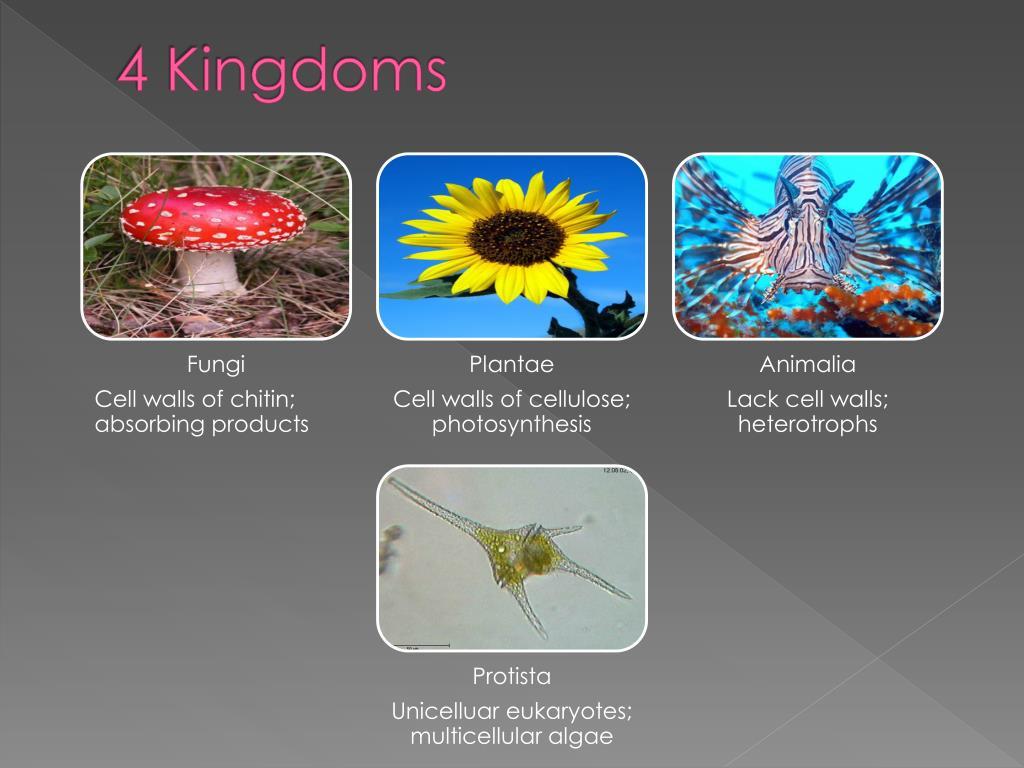 4 Kingdoms