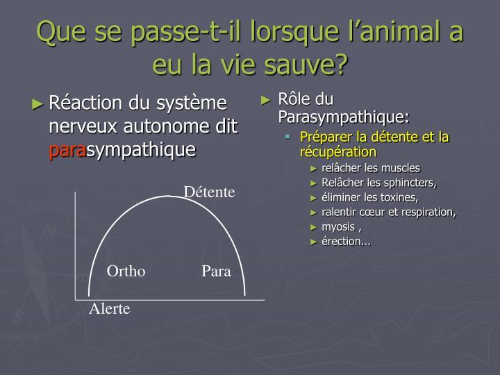 Que se passe-t-il lorsque l'animal a eu la vie sauve?