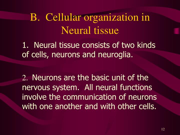 B.  Cellular organization in Neural tissue