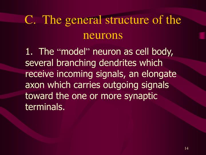 C.  The general structure of the neurons