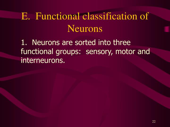 E.  Functional classification of Neurons