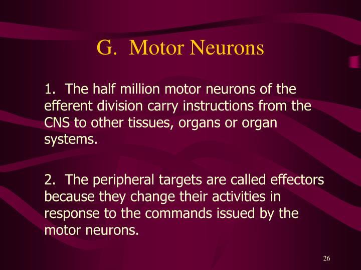 G.  Motor Neurons