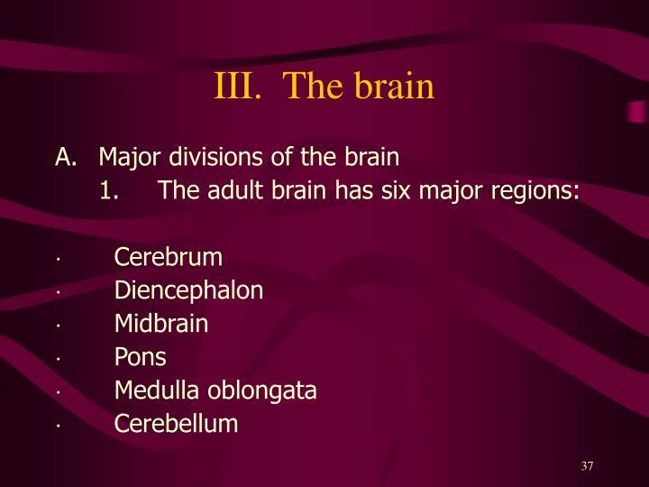 III.  The brain