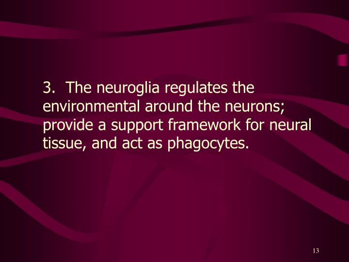 3.  The neuroglia regulates the environmental around the neurons; provide a support framework for neural tissue, and act as phagocytes.