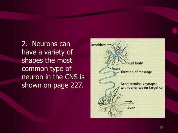 2.  Neurons can have a variety of shapes the most common type of neuron in the CNS is shown on page 227.