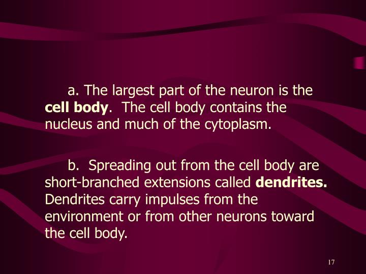 a. The largest part of the neuron is the