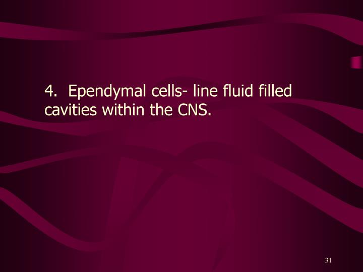 4.  Ependymal cells- line fluid filled cavities within the CNS.
