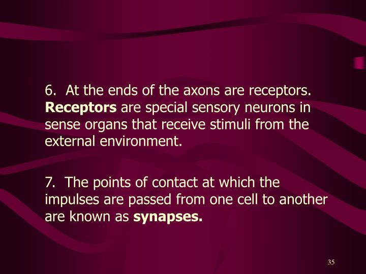 6.  At the ends of the axons are receptors.