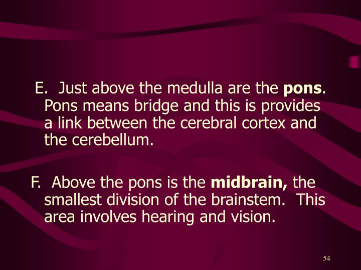 E.  Just above the medulla are the