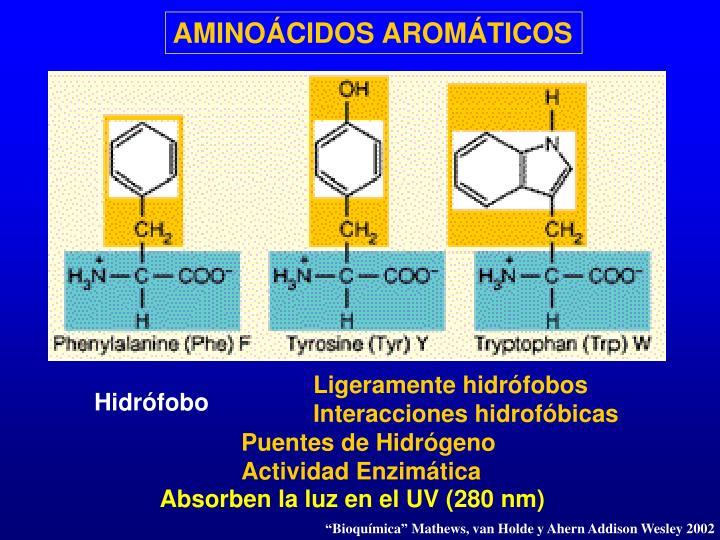 AMINOÁCIDOS AROMÁTICOS