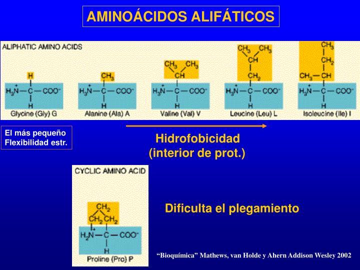 AMINOÁCIDOS ALIFÁTICOS