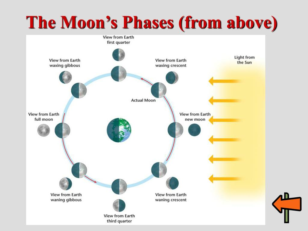 The Moon's Phases (from above)