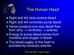 the human heart3