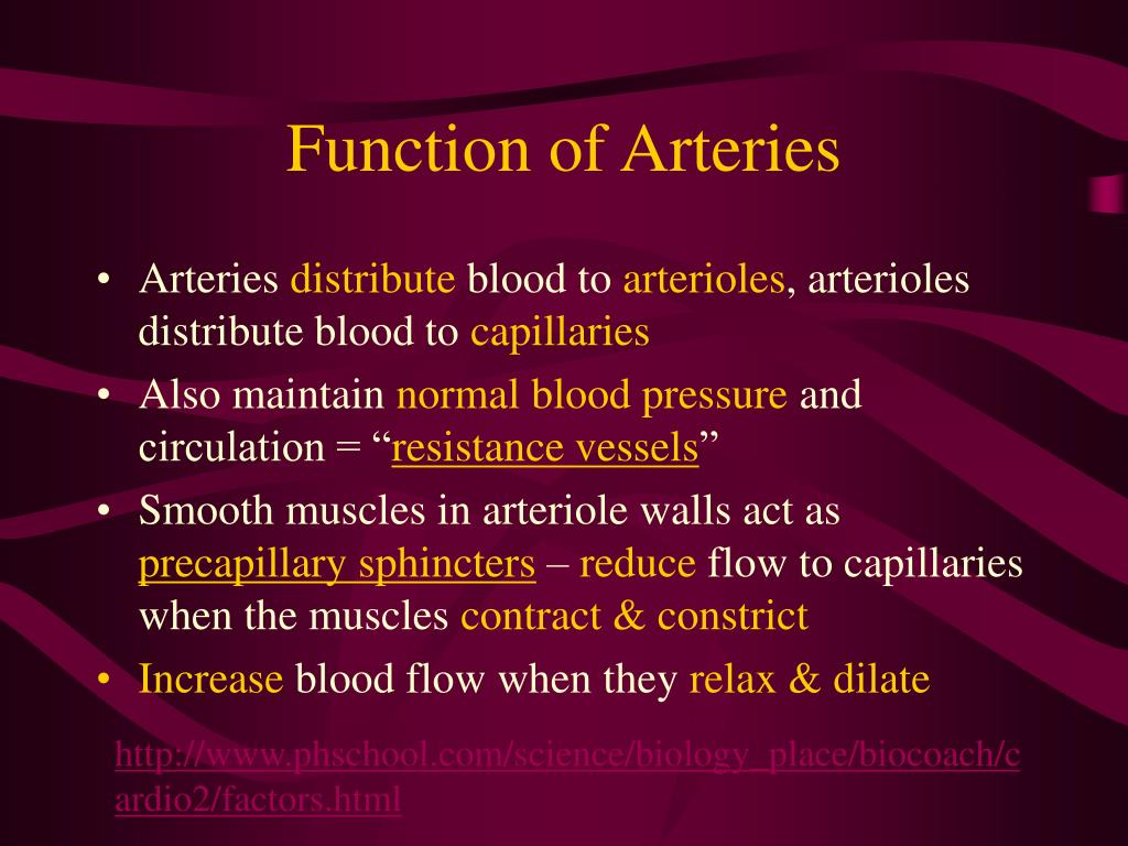 Function of Arteries