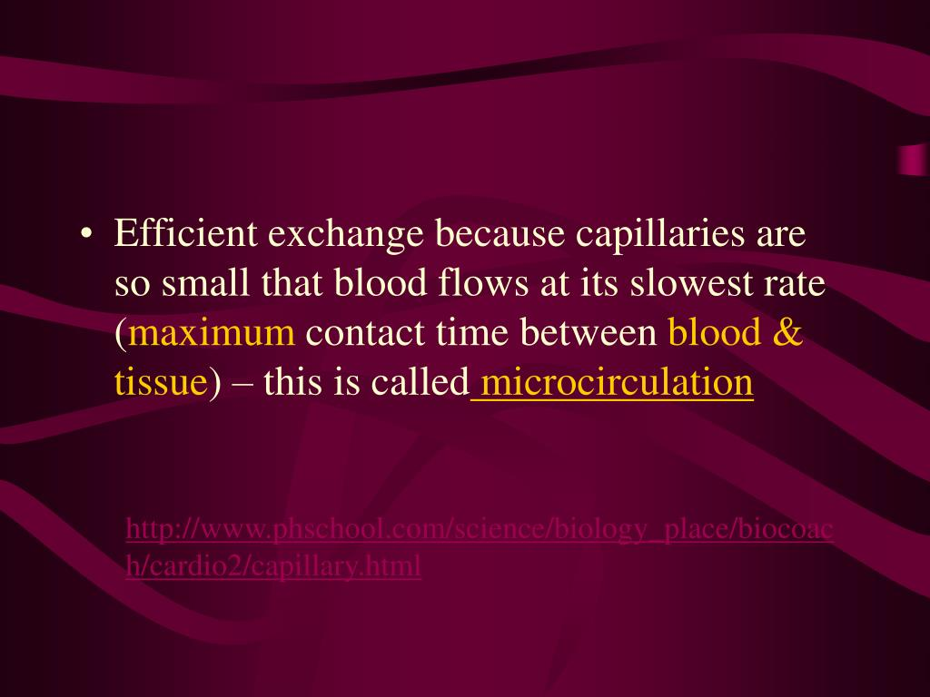 Efficient exchange because capillaries are so small that blood flows at its slowest rate (