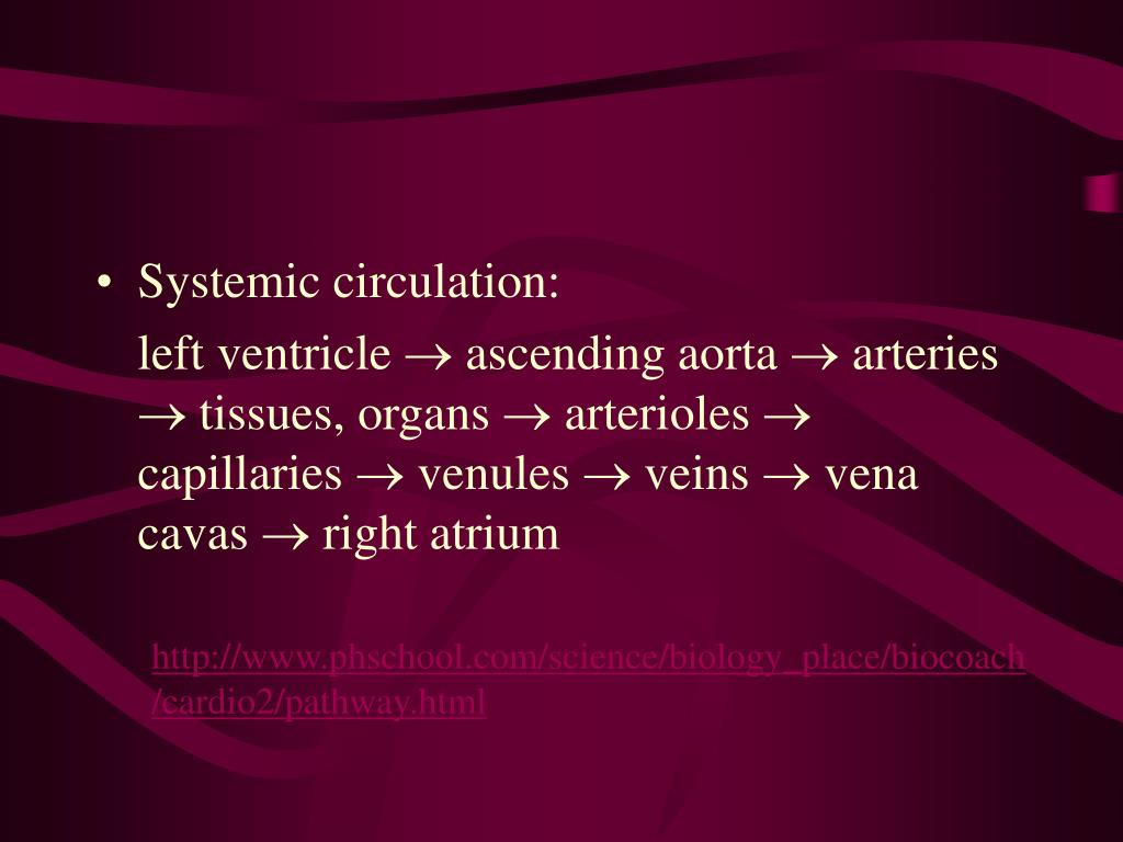 Systemic circulation: