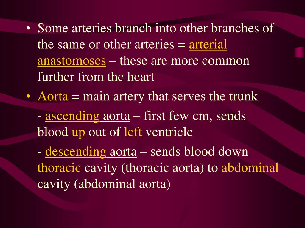 Some arteries branch into other branches of the same or other arteries =