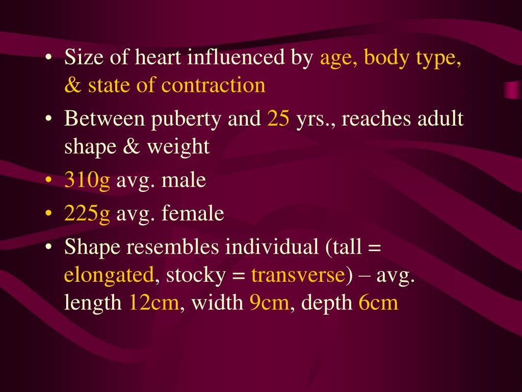 Size of heart influenced by