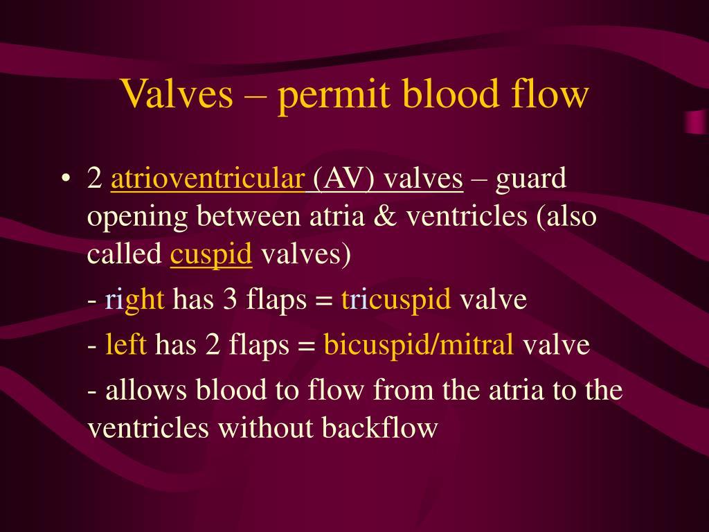 Valves – permit blood flow