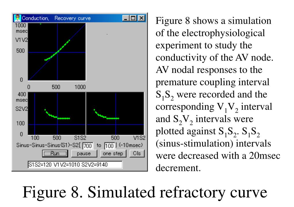 Figure 8 shows a simulation of the electrophysiological experiment to study the conductivity of the AV node. AV nodal responses to the premature coupling interval S