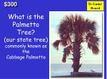 what is the palmetto tree our state tree commonly known as the cabbage palmetto