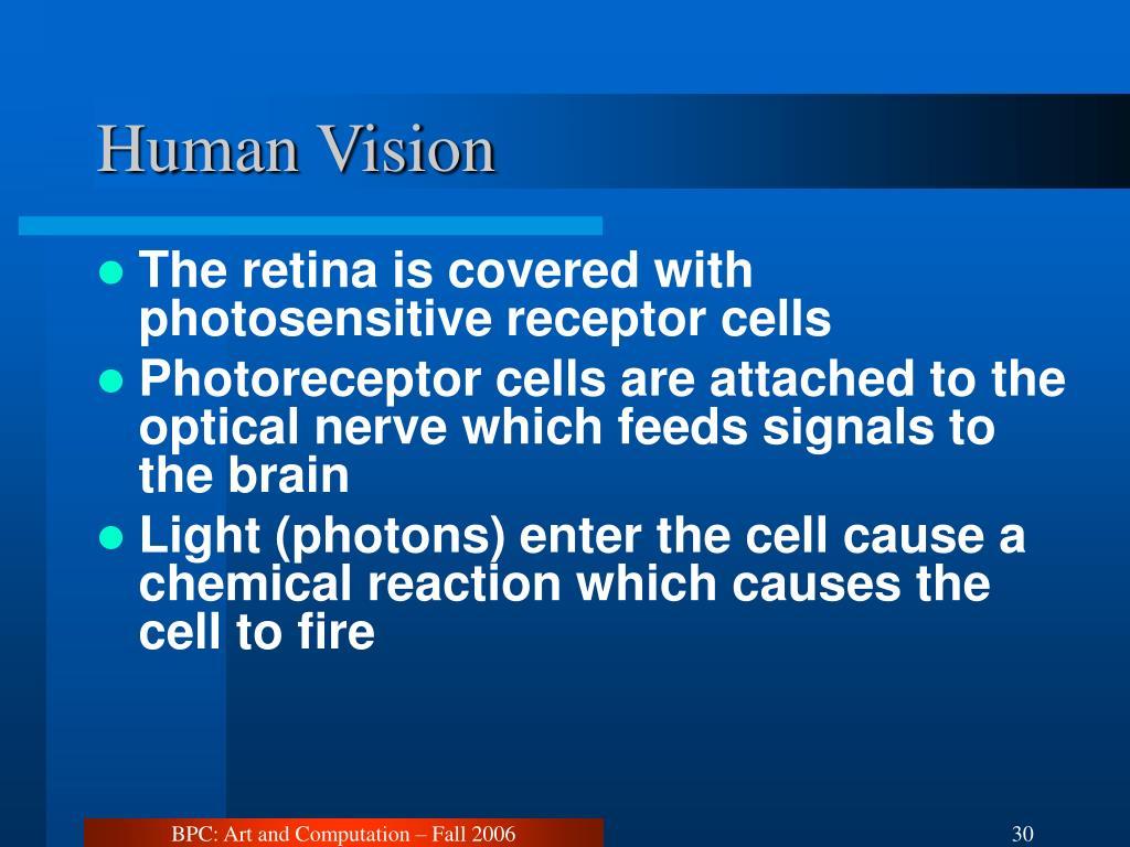 Human Vision