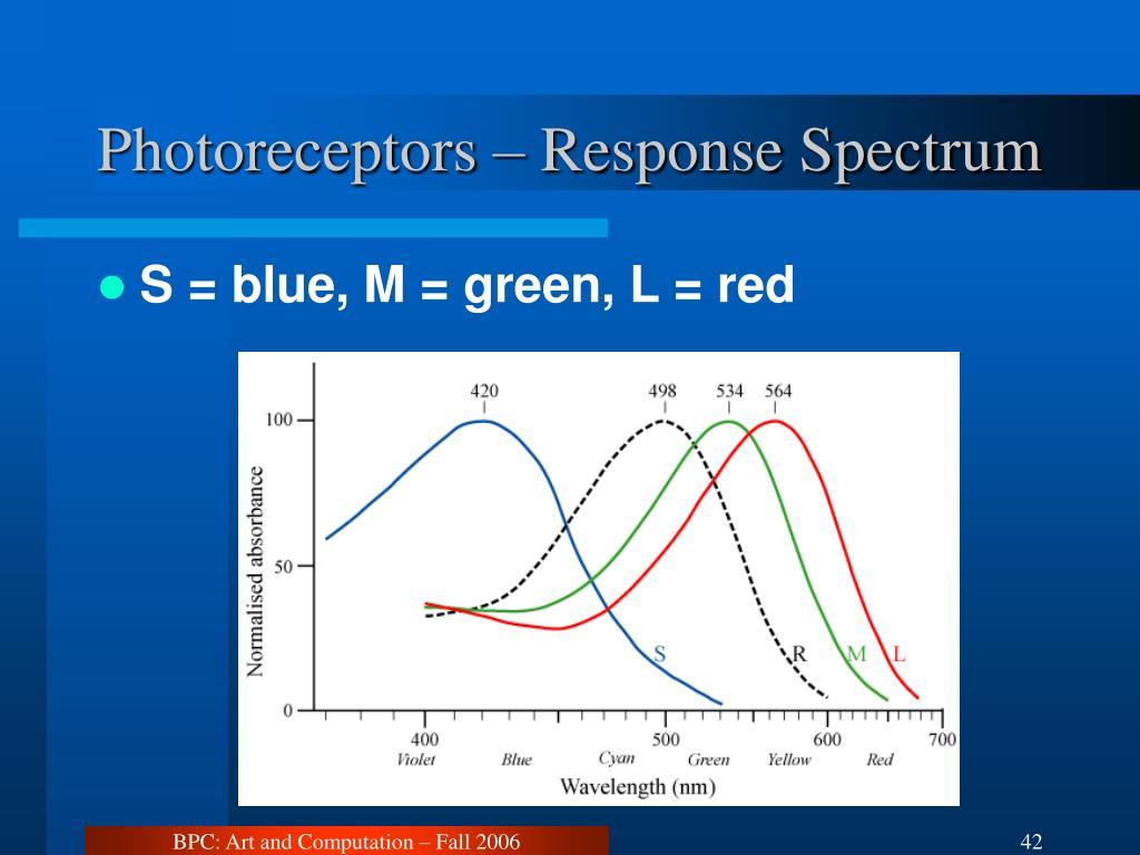 Photoreceptors – Response Spectrum