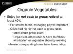 organic vegetables2