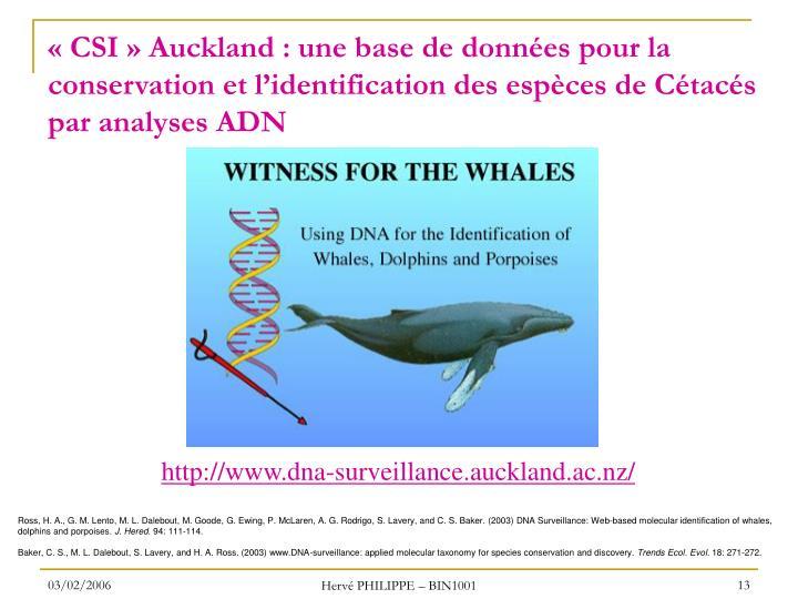 «CSI» Auckland : une base de données pour la conservation et l'identification des espèces de Cétacés par analyses ADN
