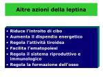 altre azioni della leptina1