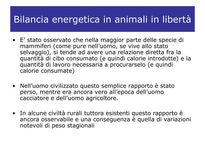 Bilancia energetica in animali in libertà