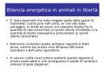 bilancia energetica in animali in libert