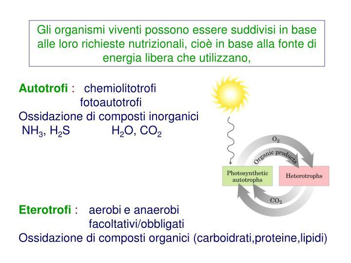 Gli organismi viventi possono essere suddivisi in base alle loro richieste nutrizionali, cioè in base alla fonte di energia libera che utilizzano,