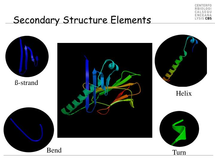 Secondary structure elements