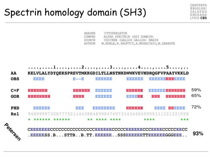 Spectrin homology domain (SH3)