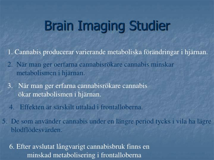 Brain Imaging Studier