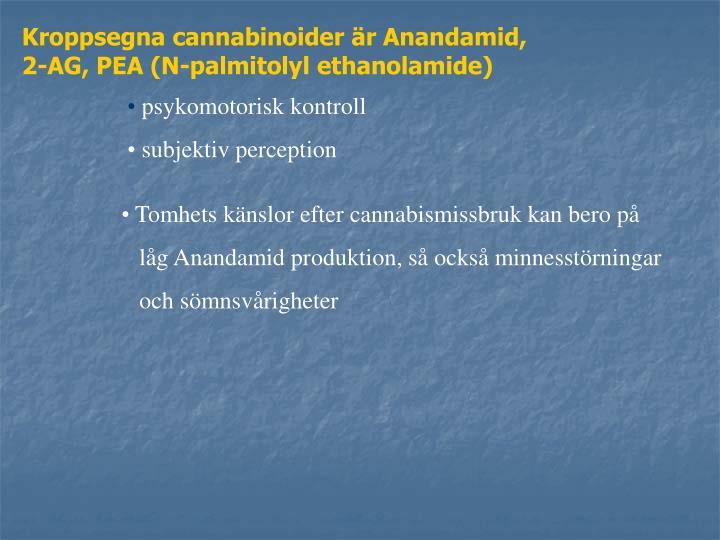Kroppsegna cannabinoider är Anandamid,