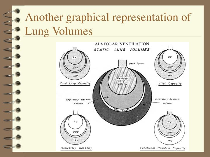 Another graphical representation of Lung Volumes