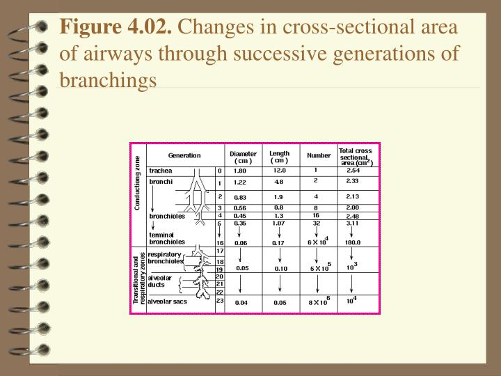 Figure 4 02 changes in cross sectional area of airways through successive generations of branchings