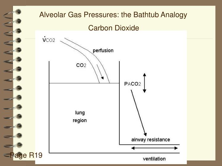 Alveolar Gas Pressures: the Bathtub Analogy