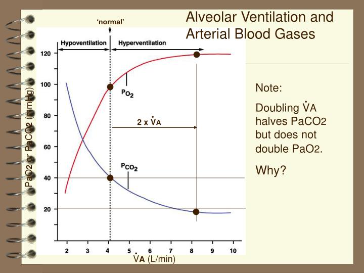 Alveolar Ventilation and Arterial Blood Gases