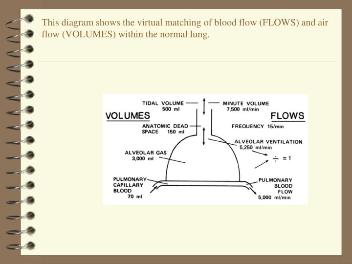 This diagram shows the virtual matching of blood flow (FLOWS) and air flow (VOLUMES) within the normal lung.