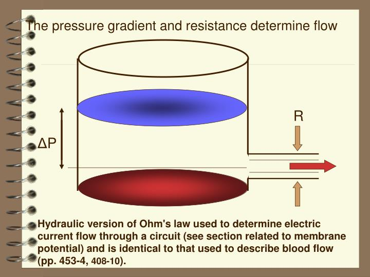The pressure gradient and resistance determine flow