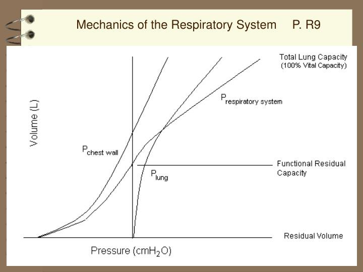 Mechanics of the Respiratory System