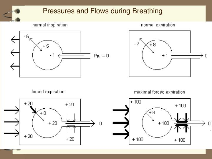 Pressures and Flows during Breathing