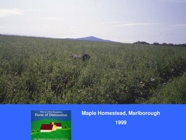 Maple Homestead, Marlborough
