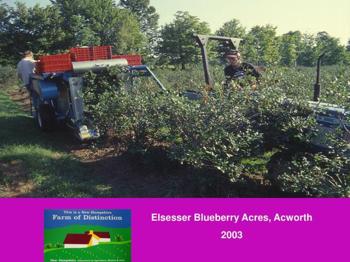 Elsesser Blueberry Acres, Acworth